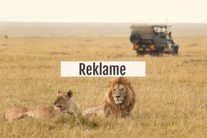 Safari: Udlev din afrikanske drøm og bliv Karen Blixen for en stund