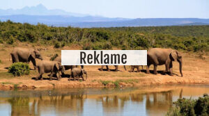 Drop safari i Danmarks dyreparker: Prøv det i det virkelige liv